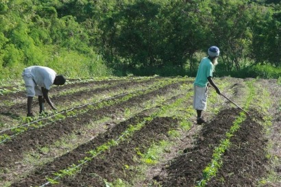Caribbean farmers to benefit from biogas