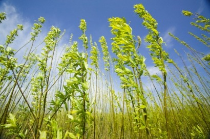 Biogas, bioethanol and microalgae projects included in new LIFE+ programme