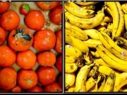 Fraunhofer turns brown bananas and squashed tomatoes into useful biogas