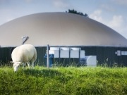 Biofuels U-turn threatens Europe's biogas lead