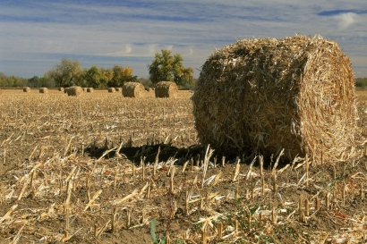 China Plans to Boost Biomass Development