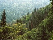 Canadian government steps up work to boost forest biomass returns