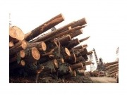 Canadian timber firm initiates $45 million bio-energy project