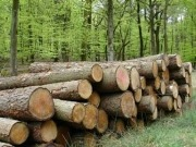 Europe sees biggest rise in biomass this century in 2010