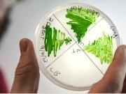 Algae biomass organization expands depth and breadth of membership