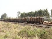 Report: New biomass initiative launched in Cambodia