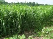 USDA Announces Restart of Biomass Crop Assistance Program