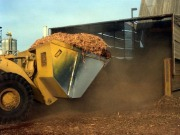 South Carolina develops guidelines to the harvesting of biomass