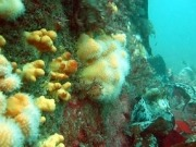 Dong Energy to build artificial reefs at offshore wind farm