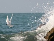 Birds influential in consent for offshore wind projects