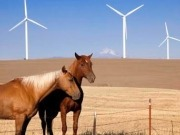 Iberdrola gets nod for up to 1-GW New Mexico wind farm