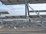 La española Soltec anuncia el suministro de 90 MW de seguidores solares para dos plantas fotovoltaicas
