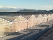 Innotech Solar modules replace traditional greenhouse roofs