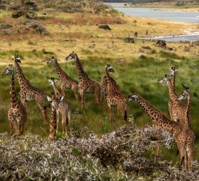 Report: Kenya, Tanzania developing geothermal resources