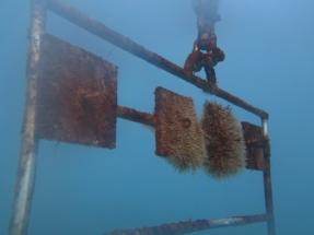 Energía marina: Desarrollan procesos para evitar la incrustación de organismos en estructuras sumergidas