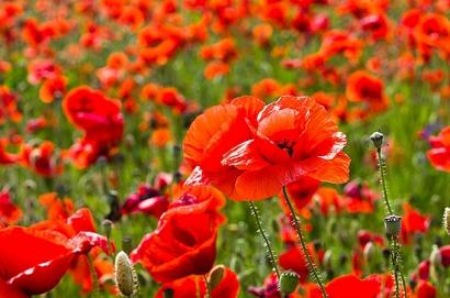 A abril con sus chaparrones, sigue mayo con sus flores
